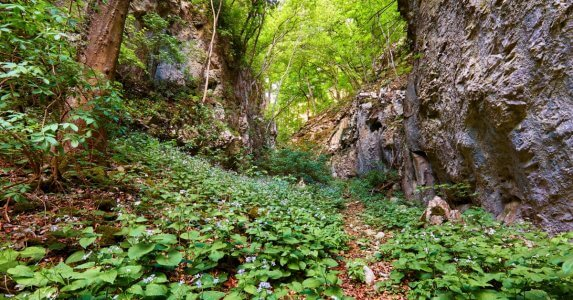 Hiking trail through a bed of mountain flowers in a gorge