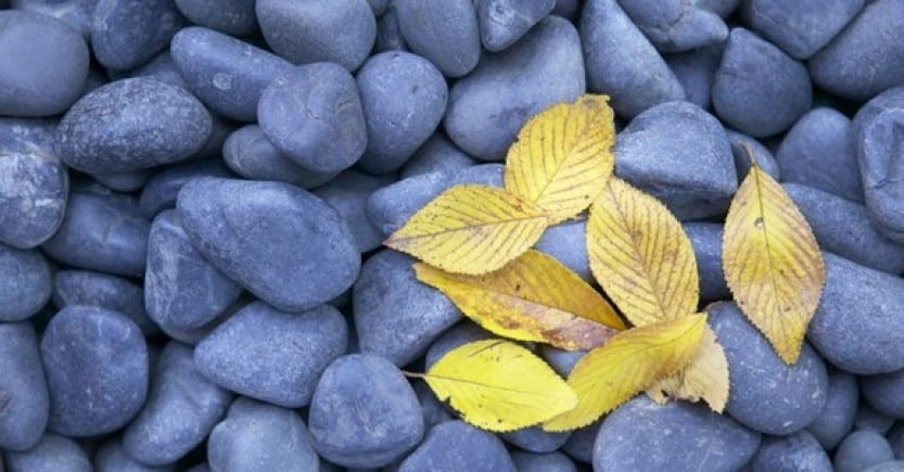 rocks leaves