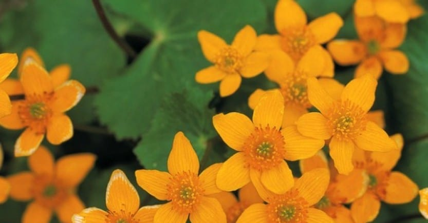 orange flowers leaves