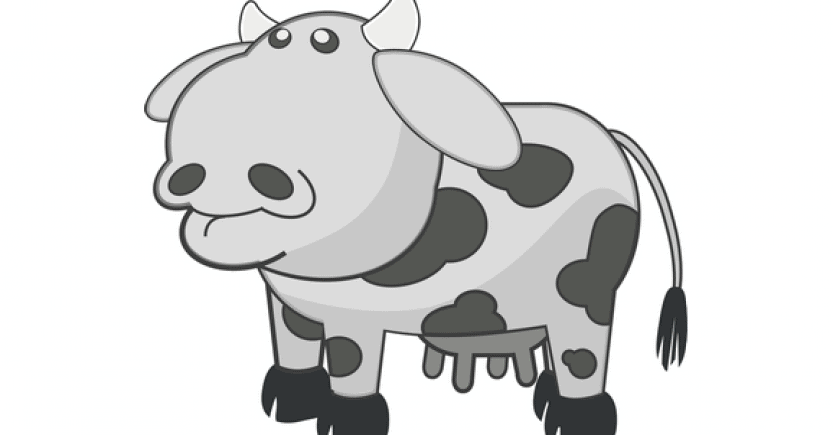 cow bw