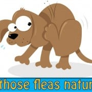 Get those fleas naturally (premium)