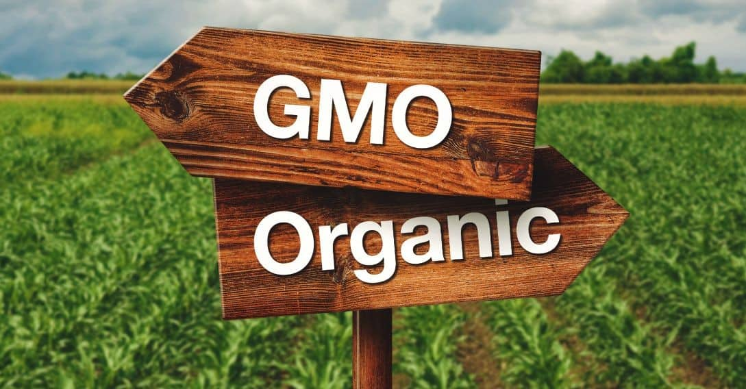 7 reasons we need to wake up about GMOs
