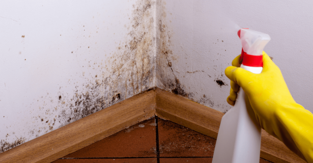 A Musts Read on Black Mold Exposure