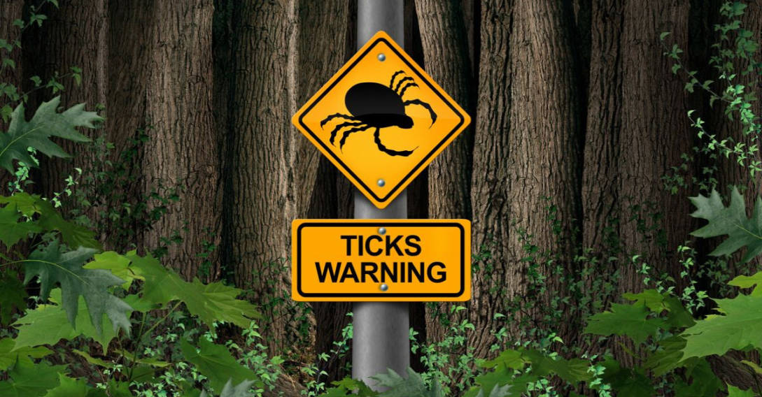 woods sign warning ticks